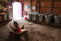 Cement Shed Chickens